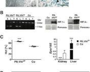 Metabolic Regulation of EPO