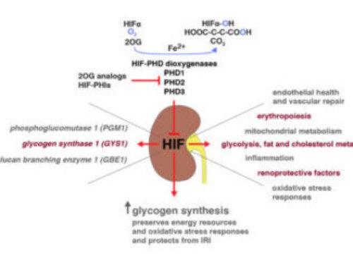 Haase VH, Kidney Int. 2020